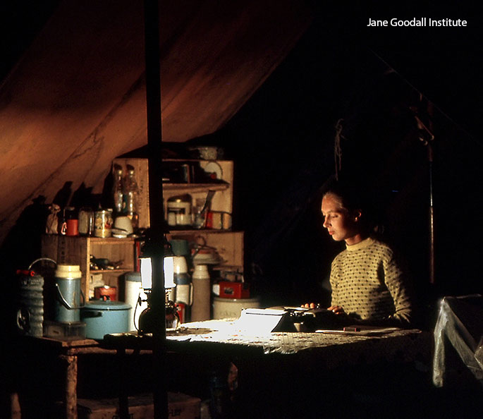 "Goodall writing up her field notes in the ""back-to-basics"" ex-army tent that she lived in at Gombe"