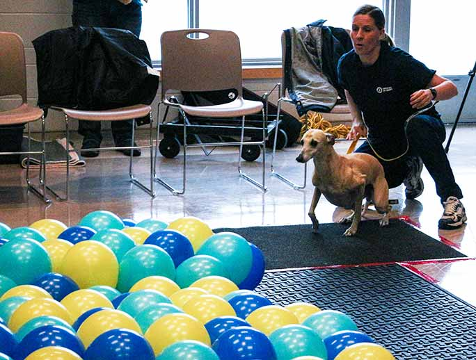 fastest time to pop 100 balloons by a dog 4