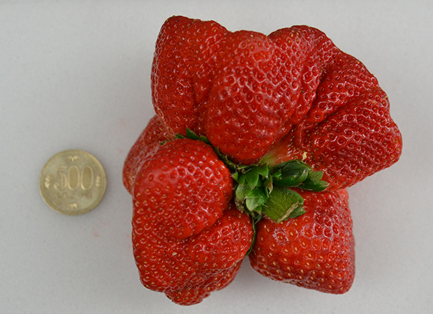 strawberry-comparison