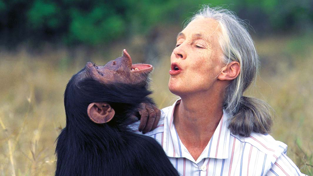 Jane-Goodall-with-chimp