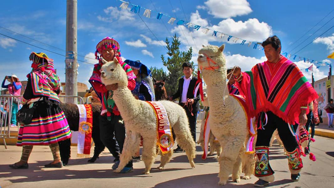 The largest parade of alpacas consisted of 1,048 alpacas in Juliaca, Peru