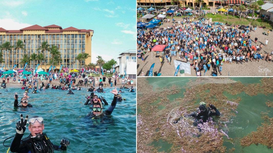 The most participants in an underwater clean-up in 24 hours is 633, and was achieved by Dixie Divers (USA) in Deerfield Beach, Florida